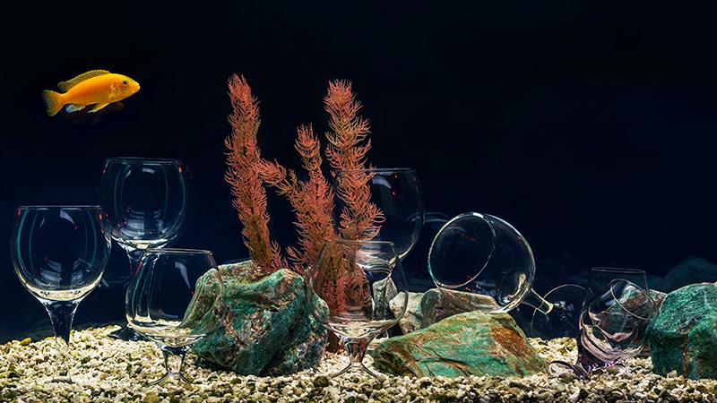 Las bodegas bajo el agua